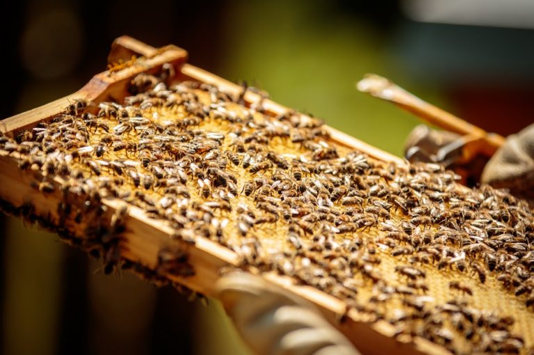 Blick auf eine Bienenwabe mit Bienen